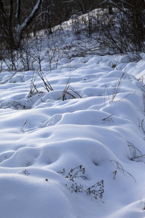 snowdrifts: Snowdrifts in winter forest after snowfall in morning