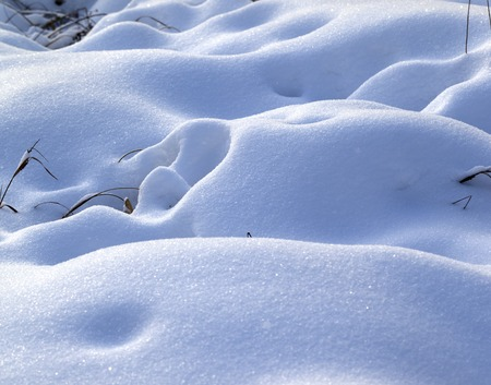 hassock: Snow drifts in winter meadow after snowfall