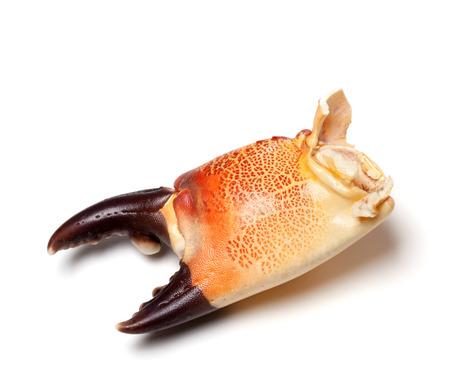 the crab: Cocido de cangrejo garra aislado sobre fondo blanco. Vista de primer plano. Foto de archivo