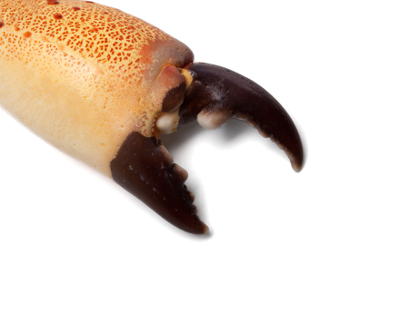 leavings: Boiled claw crab at corner. Isolated on white background with copy space.