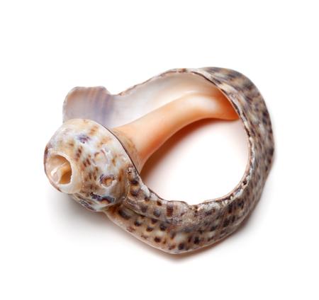scarp: Empty broken shell from rapana isolated on white background Stock Photo
