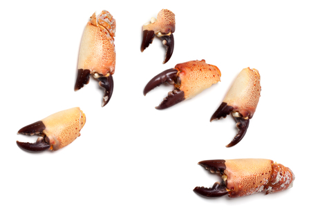 leavings: Cooked pincers from crab isolated on white background