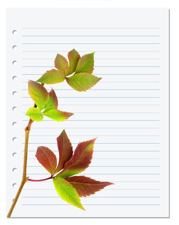 college ruled: Exercise book with multicolor virginia creeper twig (Parthenocissus quinquefolia foliage). Back to school background