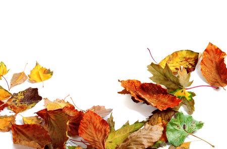 hojas secas: Multicolor hojas secas de otoño. Aislado en el fondo blanco con el espacio de la copia Foto de archivo