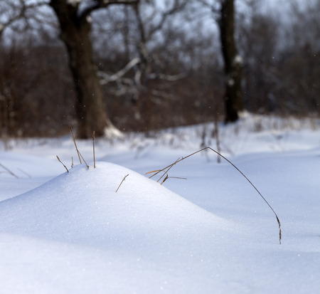 snow drift: Sunlight snow drift and dry grass in winter forest at snowfall