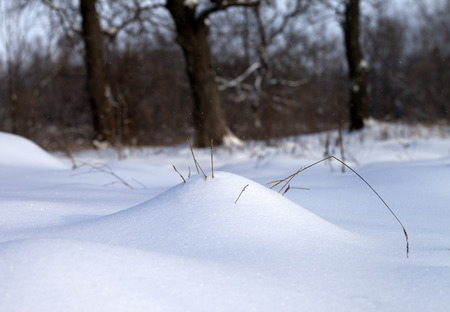 snow drift: Snow drift and dry grass in winter forest at snowfall