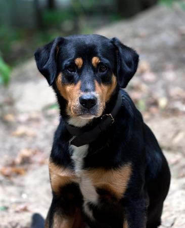 occhi tristi: Cane con gli occhi tristi in autunno foresta