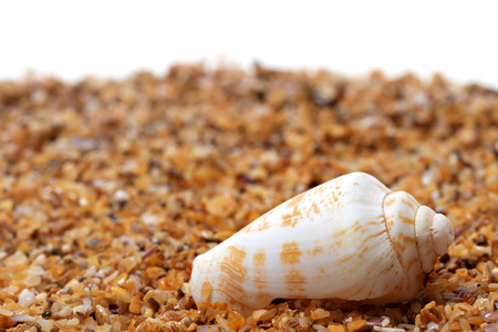 cone shell: Shell of cone snail on sand and white background with copyspace