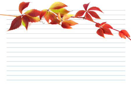 wizen: Red autumn branch of grapes leaves (Parthenocissus quinquefolia foliage) on notebook paper. Back to school background with copy space.