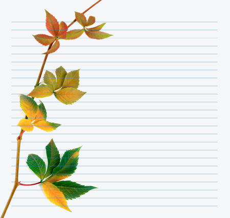 college ruled: Multicolor branch of grapes leaves (Parthenocissus quinquefolia foliage) on notebook paper. Back to school background.