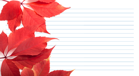 college ruled: Red virginia creeper leaves and notebook paper. Back to school background with copy space.