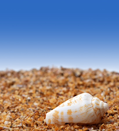 cone shell: Shell of cone snail on sand and blue background with copyspace