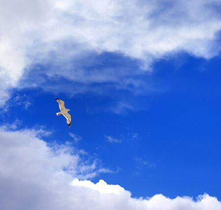 white clouds: Seagull hover in blue sky with clouds at nice sun day Stock Photo