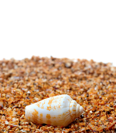 cone shell: Shell of cone snail on sand and white background with copy space Stock Photo