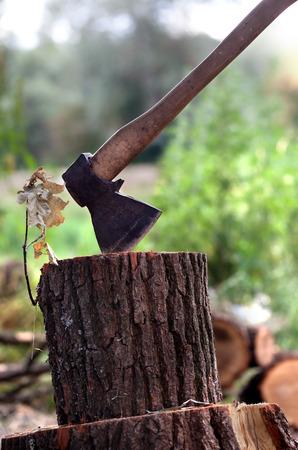 filings: Axe in oak stump in forest Stock Photo
