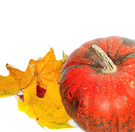 Red ripe pumpkin with autumn maple-leafs. Isolated on white background Stock Photo