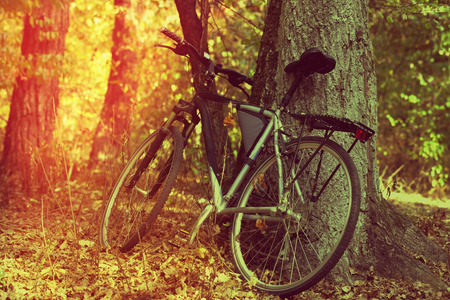 mtb: Bicycle in autumn forest near oak tree in nice sun day. Toned landscape. Stock Photo