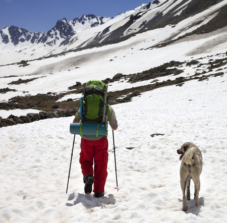 Hiker with dog in snowy mountains at sun spring day. Turkey, Kachkar Mountains (highest part of Pontic Mountains).