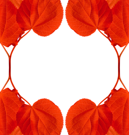 limetree: Frame of red autumn leaves isolated on white background with copy space Stock Photo
