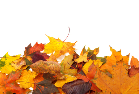 Autumn multicolor leafs isolated on white background with copy space