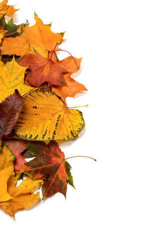 Autumn multicolor leaves. Isolated on white background with copy space.