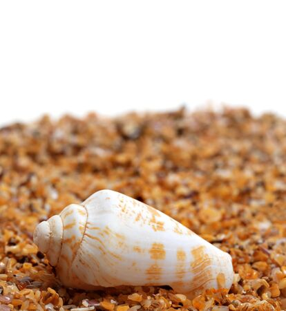 Shell of cone snail on sand and white background with copy space Stock Photo