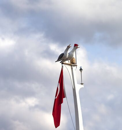 outcry: Two screaming seagulls on boat mast with Turkish flag at sun cloudy day