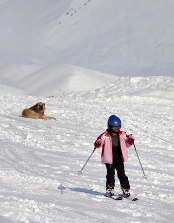 ski traces: Little skier and dog on ski slope at sunny winter day. Caucasus Mountains. Georgia, region Gudauri.