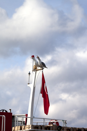 outcry: Two seagull on boat mast with Turkish flag at sun cloudy day Stock Photo