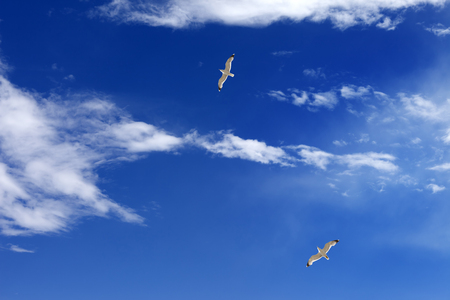 Two seagulls hover in blue sky with sunlight clouds at sun summer day