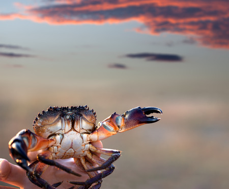 Caught crab in hand and sunset sky with clouds at background