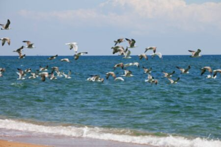 wing span: Blurred view of flock of seagulls flying over sea at sun summer day. Use as background