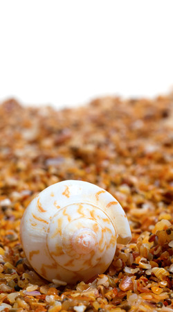 Sunlight seashell on sand and white background with copy space