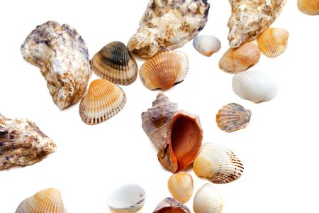 Various of seashells isolated on white background