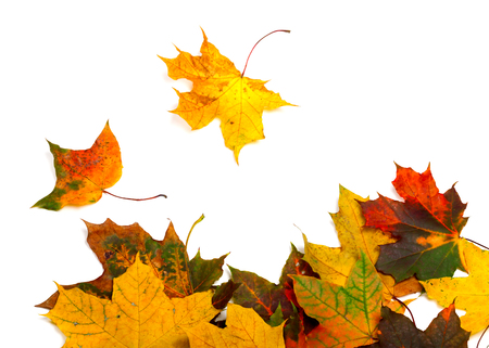 Autumn multicolor maple-leafs isolated on white background