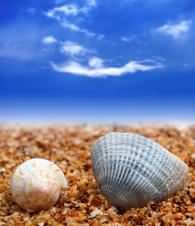 Two seashells on sand beach and blue sunlight sky with clouds at background Stock Photo