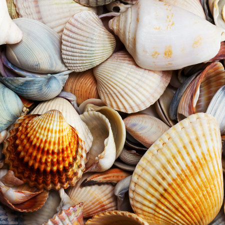 Variety of seashells at summer day