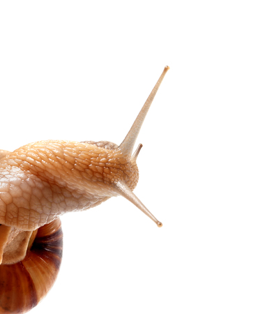Part of snail isolated on white background. Close up view.