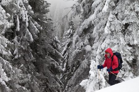 Hiker makes his way on snowy slope in snow-covered forest at gray winter day after snowfall. Carpathian Mountains, Ukraine. Remote location.