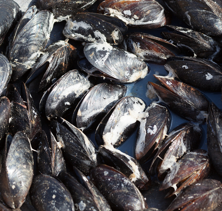 Freshly cooked wet mussels on sea coast at sunny summer day. Outdoor cooking. Close-up view. Stock Photo