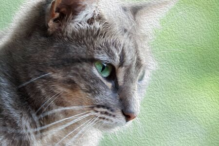 Portrait of a gray cat with green eyes . Close-up view. Oil paint effect filter.