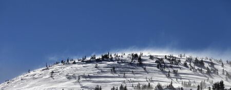 Snowy slope with fir and blue clear sky at wind winter day. Carpathian Mountains, Ukraine. Panoramic view.