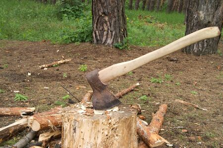 Ax in stump on clearing in pinewood at sun summer day