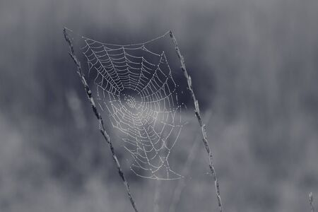Spider web with dew drops at early morning and blurred background. Black and white toned image.