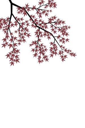 acer: Maple Leaf