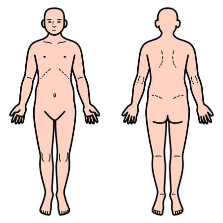 cuerpo humano: delante cuerpo humano y la espalda Vectores