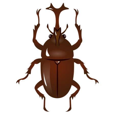 arthropods: Illustration of Beetle