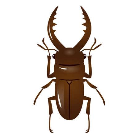 stag beetle: Illustration of stag beetle