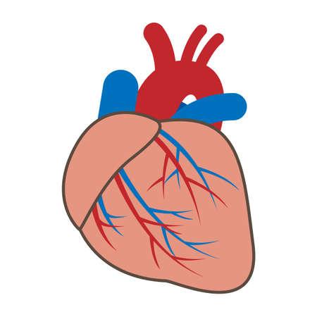 Illustration of cardiovascular system Illustration