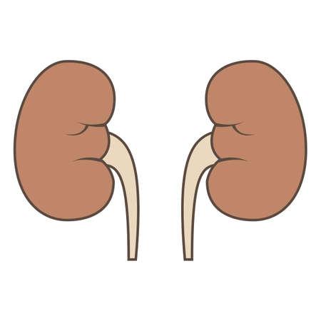 腎臓のイラスト  イラスト・ベクター素材